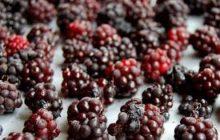 Blackberry Ice E-juice by Atomic Dog Vapor Review