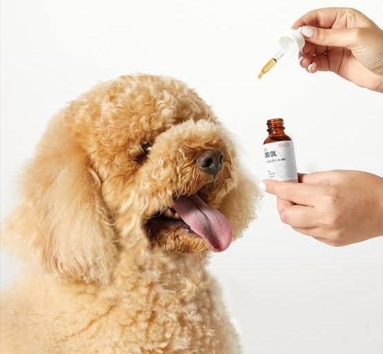 Best CBD Tincture for Pets by Penelope's Bloom Review